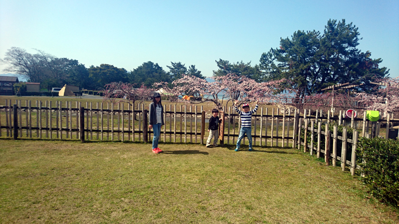 桜満開のキャンプ日和