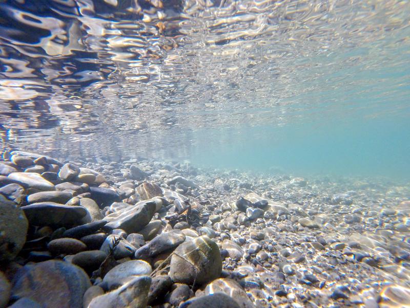 GoProHEROで水中撮影